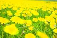 De weide van bloemen Stock Foto