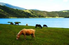 De Weide van de Berg van het meer Stock Foto