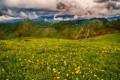 De weide van de bergbloem met berg Stock Afbeelding