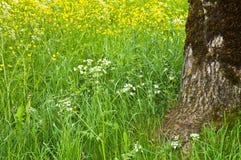 De weide van de bloem Royalty-vrije Stock Afbeeldingen