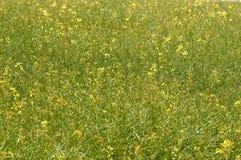 De weide van de bloem Royalty-vrije Stock Fotografie