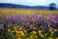 De Weide van de bloem Stock Foto