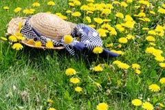 De weide van de de hoedenpaardebloem van het stro Royalty-vrije Stock Foto's