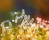 De weide van de de zomerbloem royalty-vrije stock foto