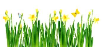 De weide van de lente Stock Afbeelding