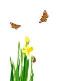 De weide van de lente Royalty-vrije Stock Foto's