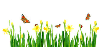 De weide van de lente Stock Fotografie
