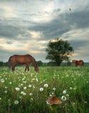 De weide van de lente royalty-vrije stock afbeeldingen