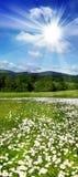 De weide van de lente stock foto's