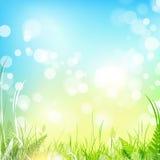 De weide van de lente met blauwe hemel Stock Afbeeldingen