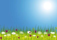 De weide van de lente met bloemen Royalty-vrije Stock Afbeelding