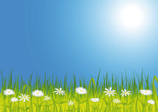 De weide van de lente met bloemen Royalty-vrije Stock Foto