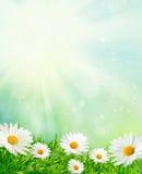De weide van de lente met madeliefjes Royalty-vrije Stock Afbeeldingen