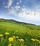 De weide van de lente met paardebloemen stock fotografie