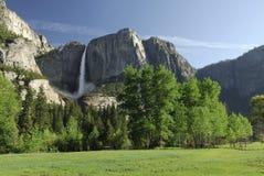 De weide van de lente in Vallei Yosemite Stock Foto