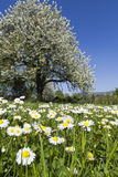 De weide van de lente, zonnige dag Royalty-vrije Stock Foto's