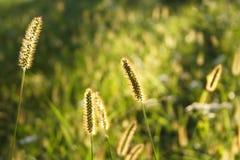 De Weide van de zomer stock afbeelding