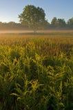 De Weide van de zomer royalty-vrije stock afbeelding