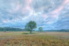 De Weide van de zomer in Dawn stock fotografie