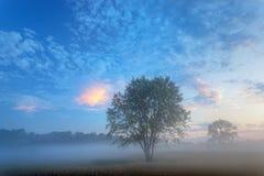 De Weide van de zomer in Dawn stock afbeeldingen