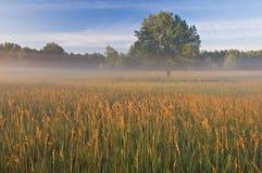 De Weide van de zomer in Mist royalty-vrije stock afbeelding
