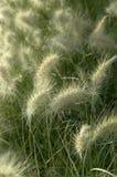 De weide van het gras Stock Foto