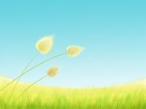 De weide van het gras Stock Afbeelding