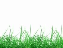 De weide van het gras Stock Afbeeldingen