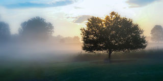 De weide van het land op een mistige ochtend Stock Afbeeldingen