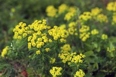 De weide van het de lenteplatteland met bloemen abstracte dichte omhoog neutrale achtergrond royalty-vrije stock foto