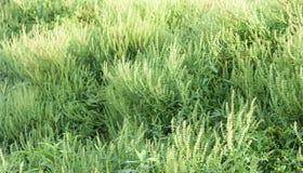 De weide van de de lentebloem E stock afbeelding