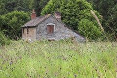 De Weide van Wildflower Royalty-vrije Stock Foto