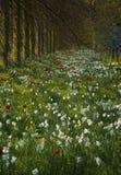 De weide van Wildflower Stock Afbeeldingen