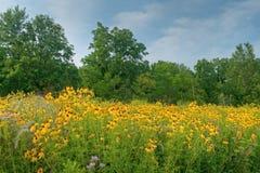 De Weide van Wildflower van de zomer royalty-vrije stock foto