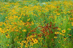 De Weide van Wildflower van de zomer stock afbeelding