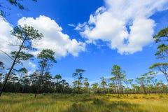 De weidegebied van THUNG NIET zoon-A dichtbij het centrum van het park op een plateau in het Nationale Park van Thung Salaeng Lua Royalty-vrije Stock Fotografie