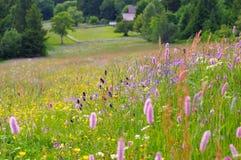 De weiden van de de lentebloem in bergen Royalty-vrije Stock Afbeeldingen