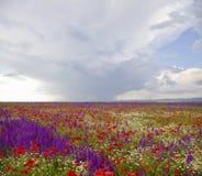 De Weiden van de lente Stock Afbeeldingen
