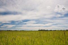 De Weiden van de prairie Royalty-vrije Stock Afbeeldingen