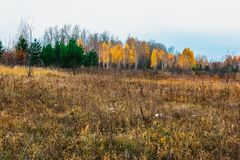 De weiden van het alluviale gebied van bos-steppestreek stock foto