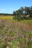 De Weiden van Nachusa - Illinois Stock Afbeeldingen