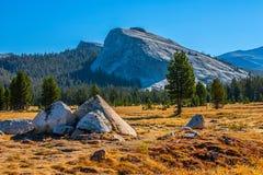 De weiden van Tuolumne in de zomer, Nationaal Park Yosemite. stock afbeelding