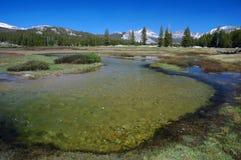 De Weiden van Tuolumne, Yosemite royalty-vrije stock afbeelding