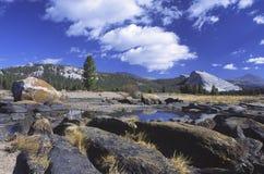 De Weiden van Tuolumne in Yosemite Stock Afbeelding