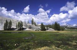 De Weiden van Tuolumne in Yosemite stock foto's