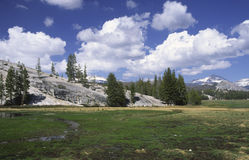 De Weiden van Tuolumne in Yosemite royalty-vrije stock fotografie