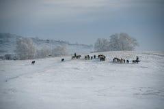 De weiden van Ulanbuh in de winter Royalty-vrije Stock Foto