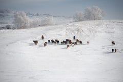 De weiden van Ulanbuh in de winter Stock Afbeelding