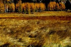 De Weiden van Yosemite stock afbeeldingen