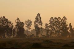 De weiden worden behandeld door grote boom Stock Foto